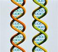 Καμπή στην αποκωδικοποίηση του ανθρώπινου γονιδιώματος