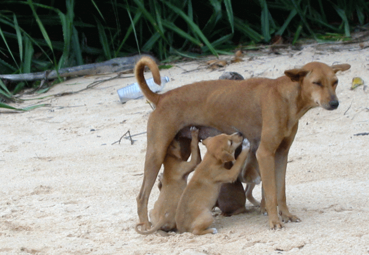 Μαστίτιδα του Σκύλου και της Γάτας
