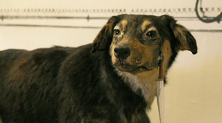 Σακχαρώδης Διαβήτης (σε σκύλο και γάτα)