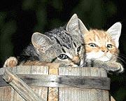 120 γάτες, θύματα στη μάχη κατά του AIDS
