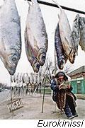 Φάτε μάτια ψάρια...