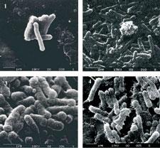 Εξωγήινα βακτήρια σε βράχους της Νάπολης