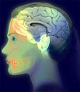 Η υψηλή χοληστερόλη επιδρά αρνητικά και στον εγκέφαλο