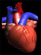 Η καρδία: μια καταπληκτική αντλία