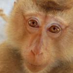 Οι Οικολόγοι Πράσινοι για την διεξαγωγή πειραμάτων σε πιθήκους