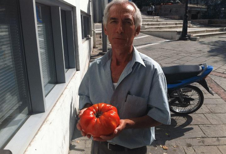 """Ντομάτες """"γίγαντες"""" στην Κοζάνη"""