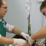 Γνωρίστε την Εθελοντική Δράση Κτηνιάτρων Ελλάδος