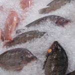 Πόσο συχνά τρώτε ψάρι;