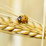 Είναι αλήθεια οτι η μεσογειακή διατροφή προφυλάσσει από τη στεφανιαία νόσο;