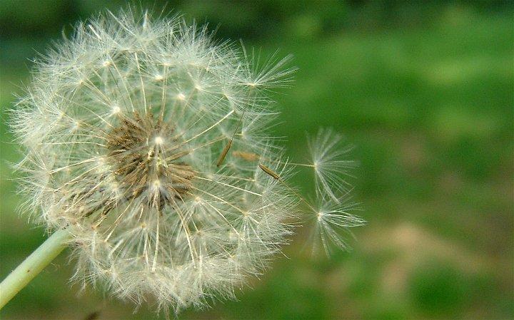 Τα Φαρμακευτικά Μανιτάρια μπορούν να βοηθήσουν όσους πάσχουν από αλλεργίες την άνοιξη