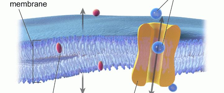 Χοληστερίνη: Δεν είναι πάντα κακή