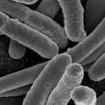 Μικρόβια και ιοί