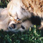 Υποθειρεοειδισμός στο σκύλο