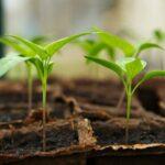 Κηπουρική: ένας πρωτότυπος τρόπος άσκησης