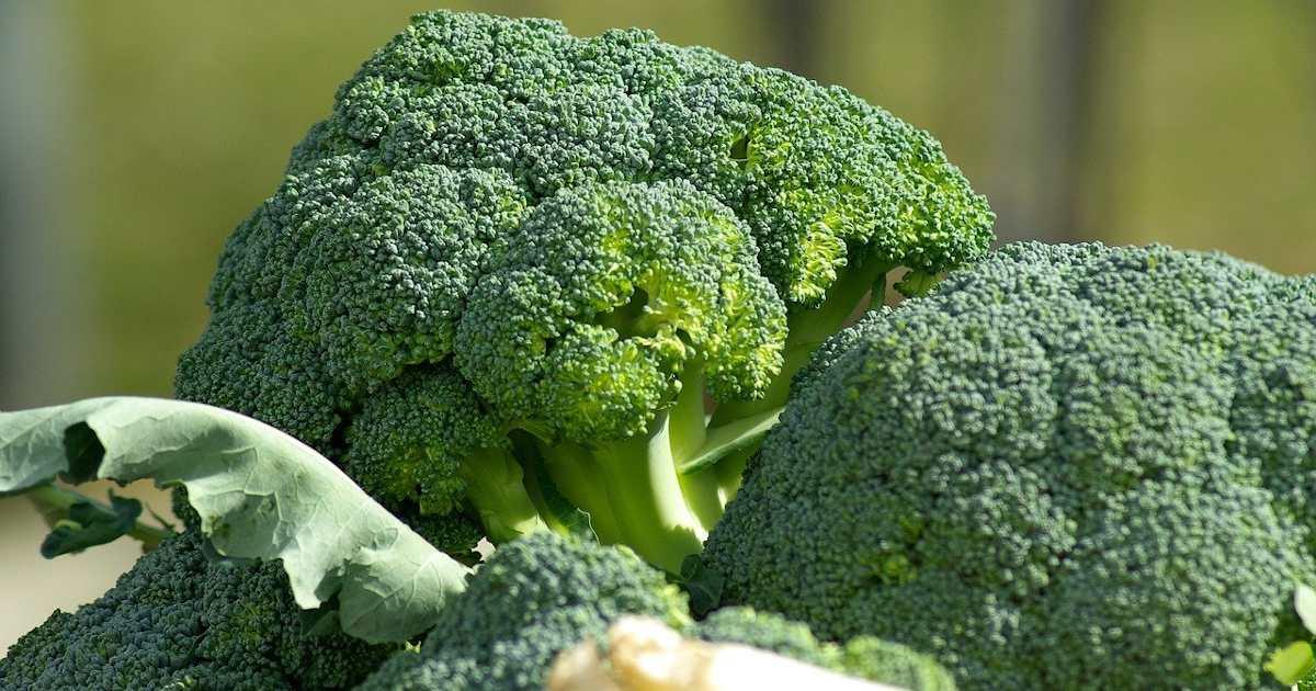Μπρόκολο και λάχανο εναντίον καρκίνου